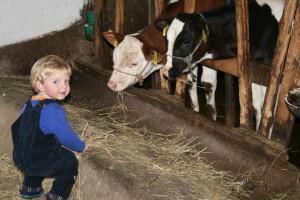 Kind füttert Kälber - Gäste v. Josef Günter -zur Veröffentl. genehmigt