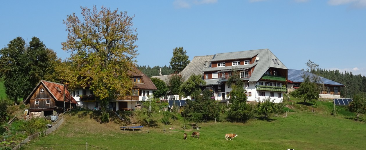 Biobauernhof mit Ferienwohnungen im Schwarzwald